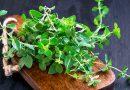15 ervas antivirais para mantê-lo saudável