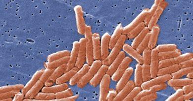 """A pesquisa de salmonelas """"pode ajudar no desenvolvimento de novos tratamentos"""""""
