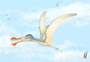 Três novas espécies de pterossauros descobertas no Saara