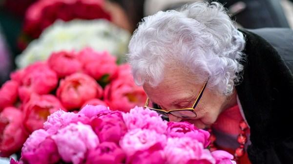 Use a perda de paladar e olfato como ferramenta de triagem importante para o Covid-19, dizem os pesquisadores